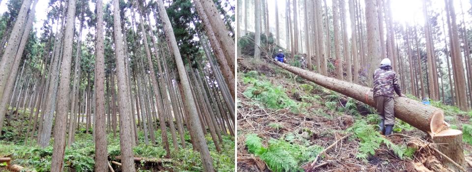 近くの山の木